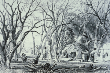 Native American sugaring camp ( Minnesota Historical Society)