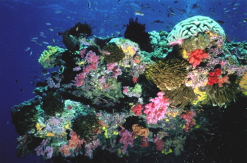 CoralReefBall