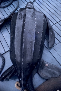 Leatherback Sea Turtle (Lawrence Wade)