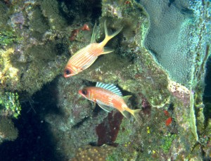 Squirrelfish (Jane Ball)