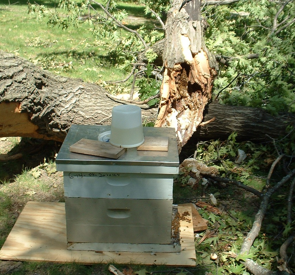 Bees going into the hive.