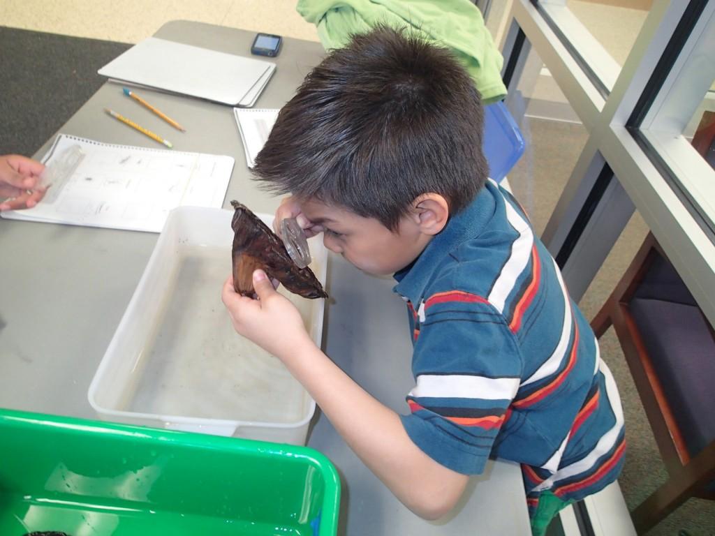 2nd grade Seed Lab