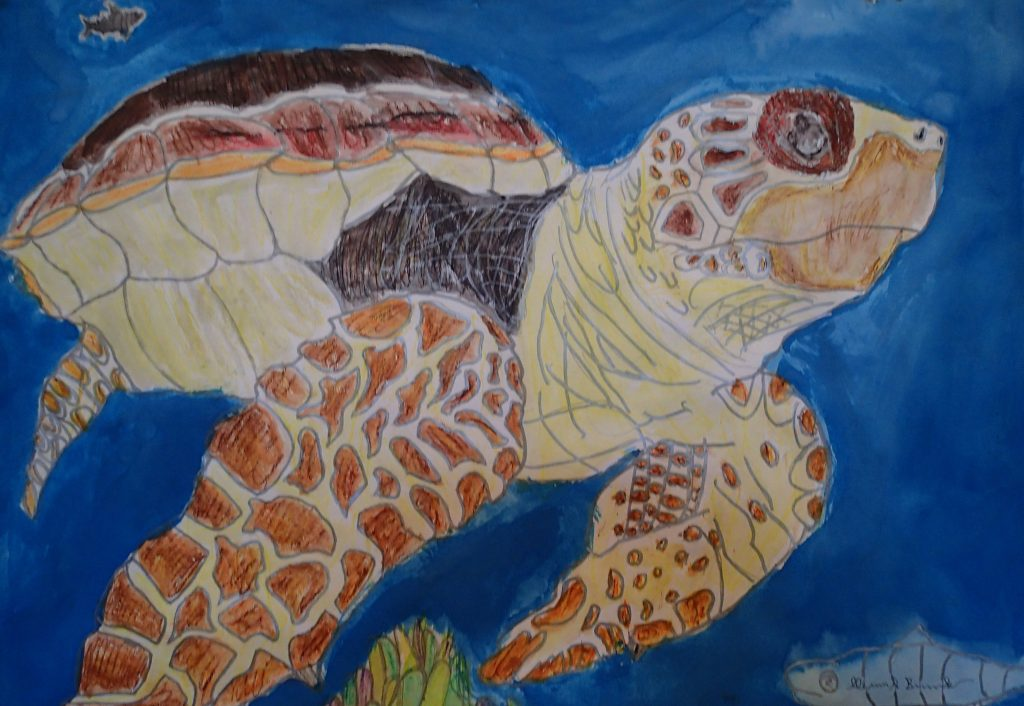 Mikey Barshack Green Sea Turtle
