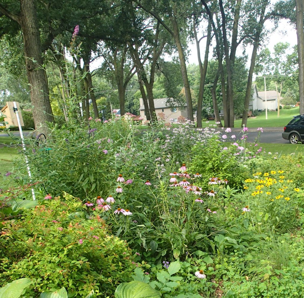 Butterfly garden, designed and planted by Felix when he was in 5th grade.