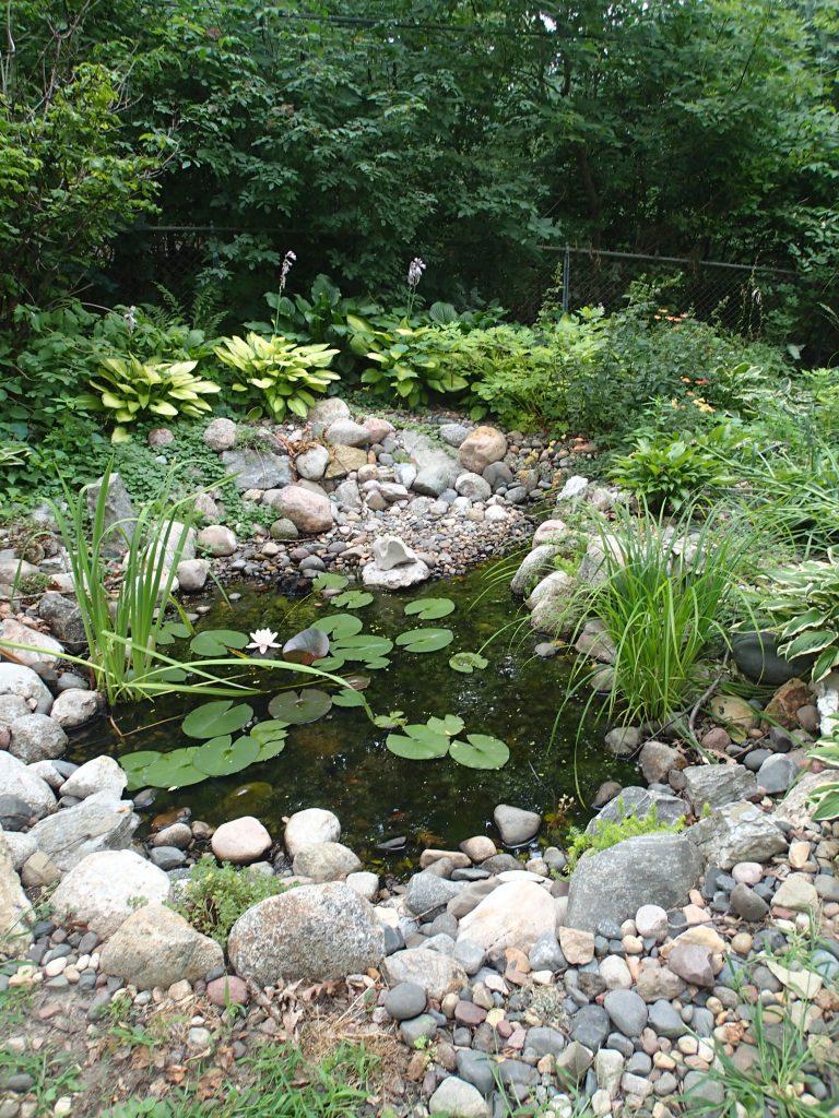 Amphibian pond that Felix designed and built.