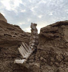 bonesin wall